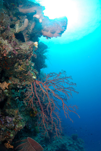 reef photograph from bunaken, indonesia