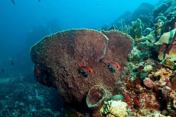 sea life animals. St. Vincent Marine Life