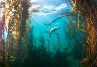 best diving destinations channel islands