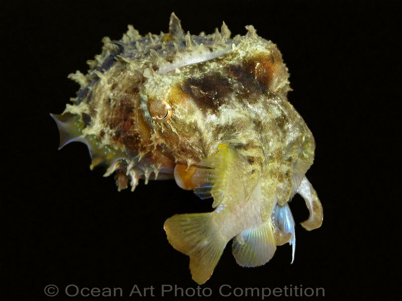 Previous winner: compact camera catgory - Cuttlefish lunch