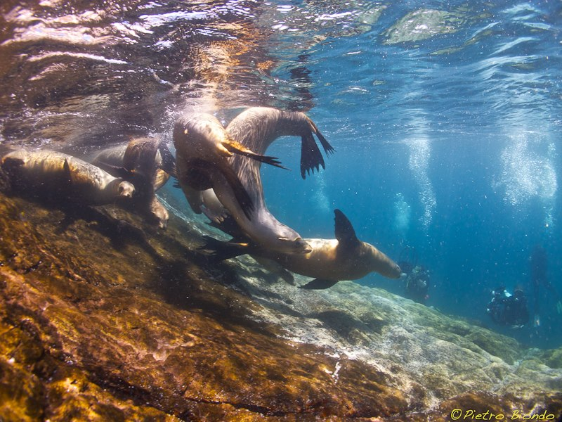 sea of cortez sea lion underwater photo trip