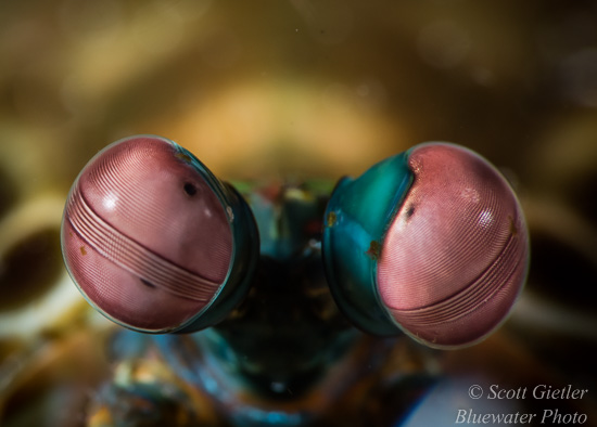 top tips for supermacro underwater photography