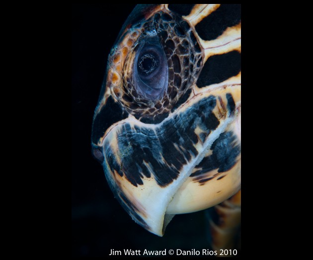little cayman digital shootout underwater photography contest