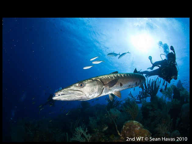 underwater photo contest winner wide-angle