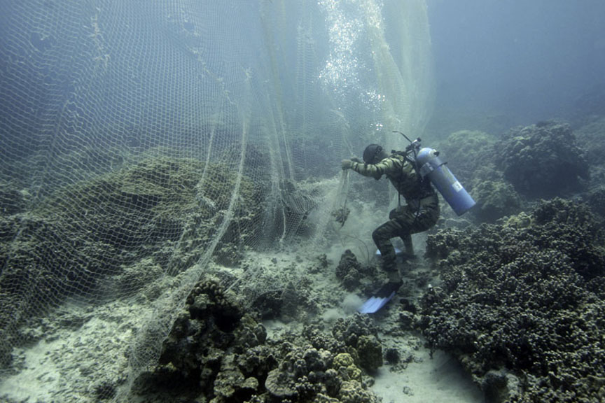 divers set the nets to capture fish in the protected reef