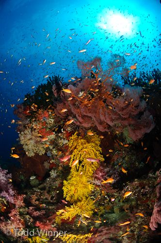 diving fiji underwater