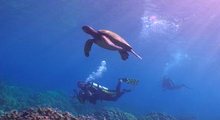 diving Kona