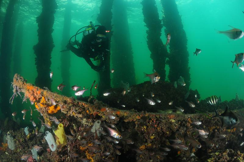 edithburgh jetty underwater