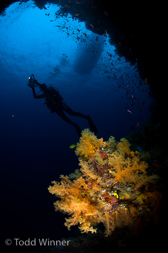 fiji underwater photography, soft coral