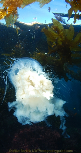 white jellyfish under the boat
