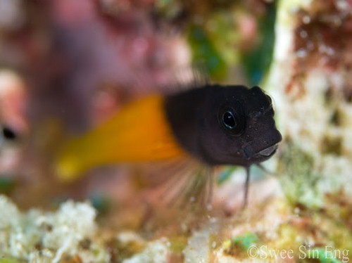panasonic 45mm macro lens underwater photo