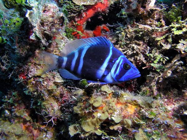 indigo fish cozumel