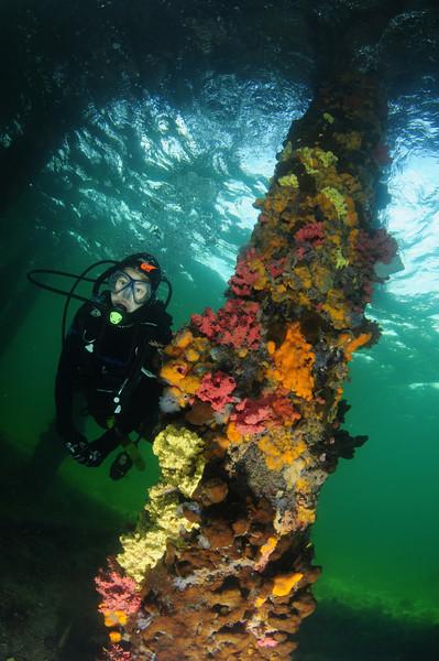 edithburgh jetty pier piling