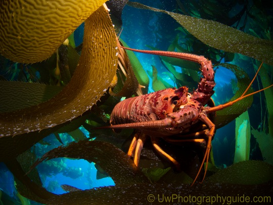 best panasonic lenses for underwater photography