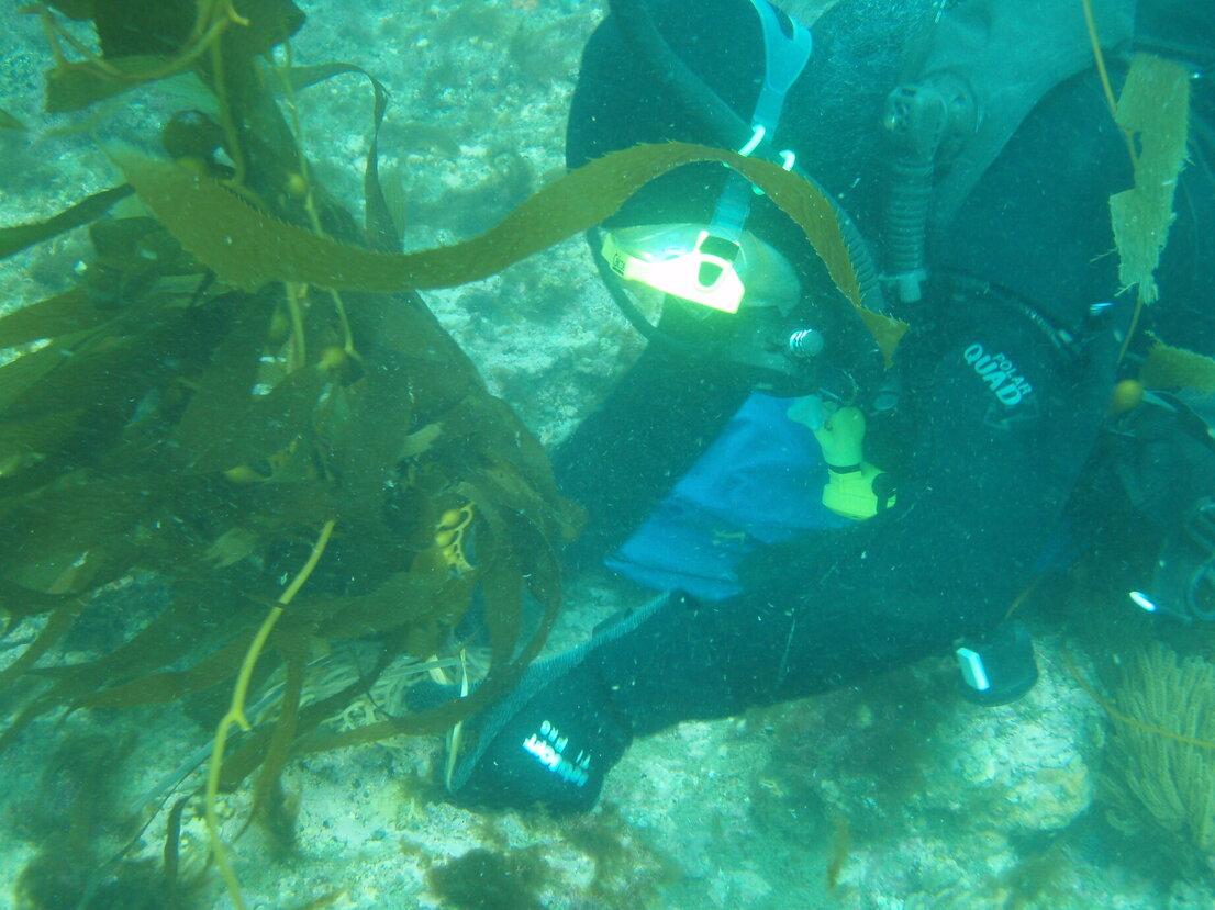 Planting Kelp