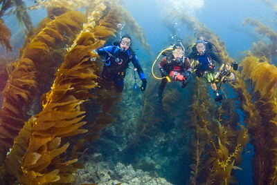 kelp forest on san clemente island