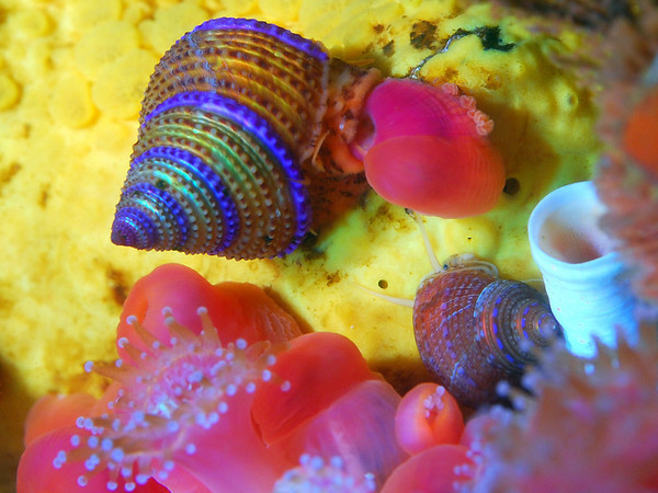 best macro lens for underwater photography