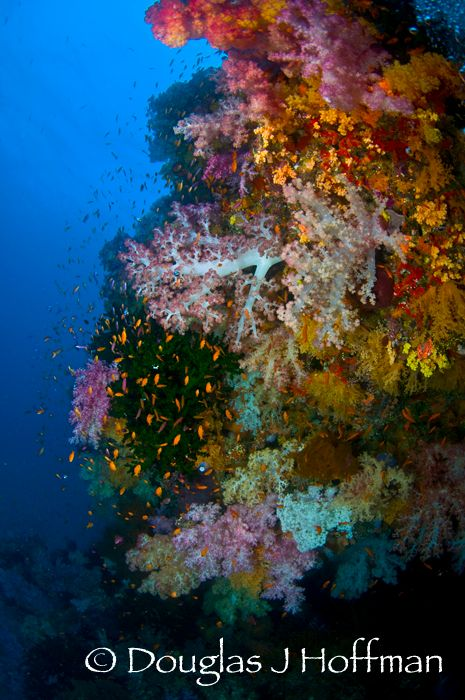 Naia Reef