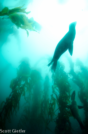 nikon d7000 underwater
