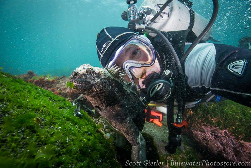 Marine Iguana selfie Galapagos