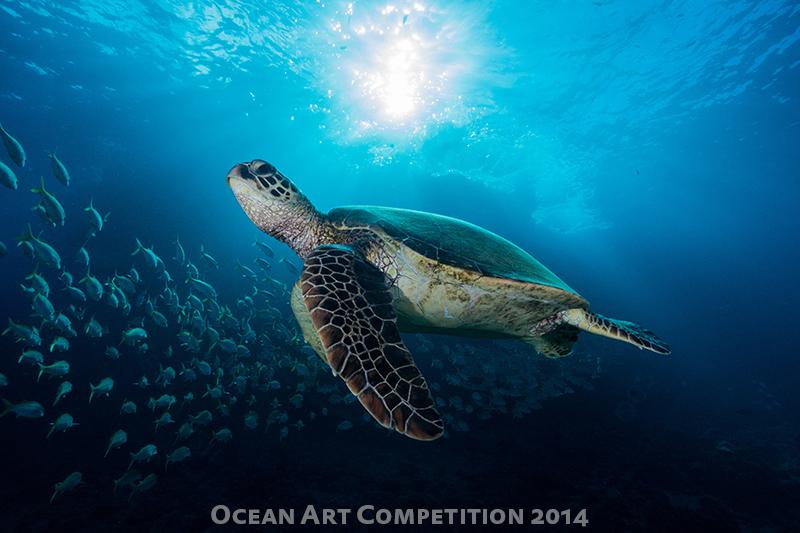 Sony A5000 underwater photo