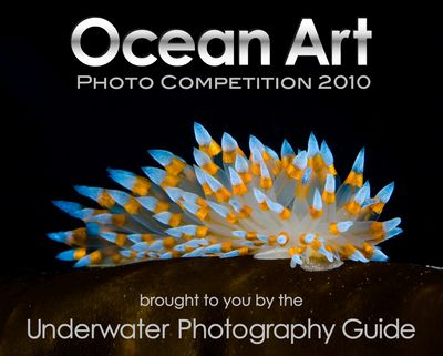 ocean art underwater photography competition