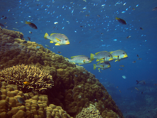 olympus e-pl1 underwater photography