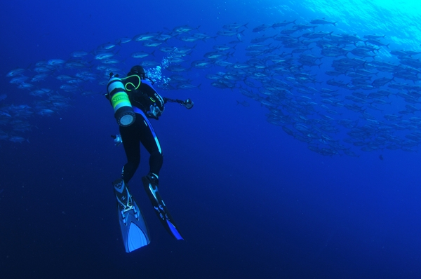 open water diving for sharks, cocos island