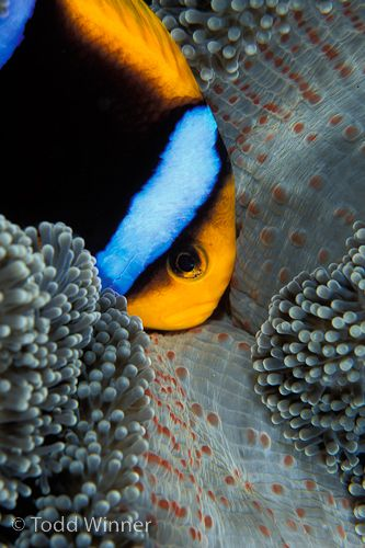 palau underwater photography