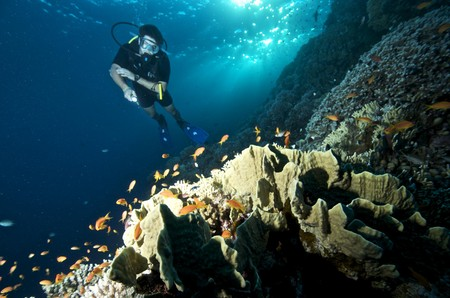 diving the red sea underwater photography