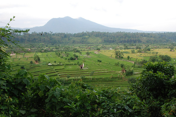 rice terraces in central bali
