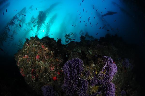 santa cruz island underwater