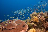 diving siladen island