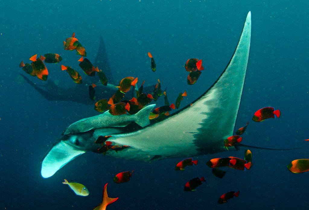 Socorro Underwater