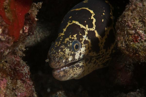 saint vincent marine life