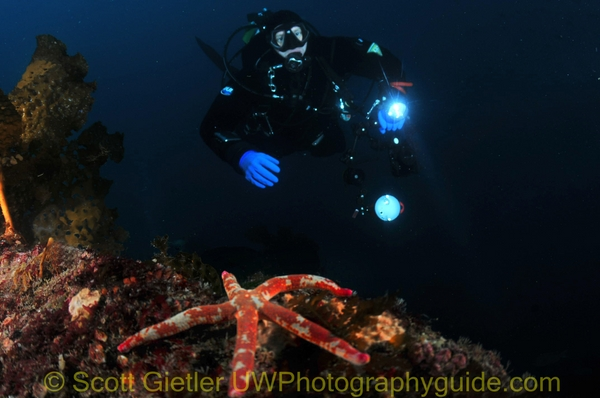 close-focus wide angle underwater photo, starfish and diver