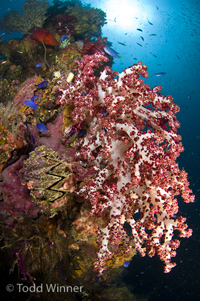 diving truk lagoon