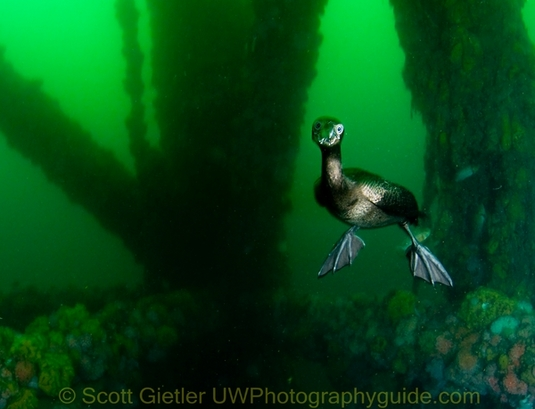 underwater behavior photography