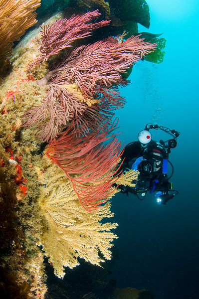 sea fans at arrow point, catalina