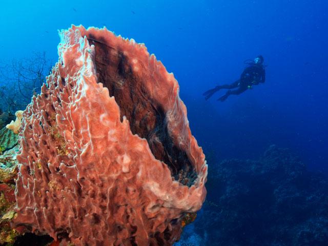 underwater sponge in cozumel