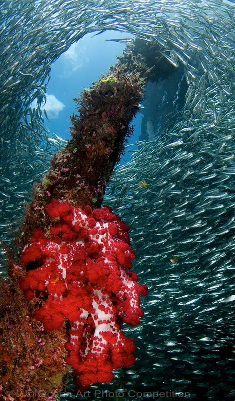 raja ampat underwater photography workshop
