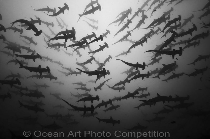 compact wide angle underwater photo contest winner