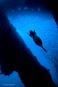 silhouette underwater photo