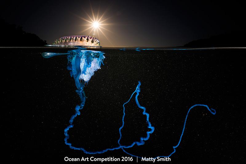 2016 Ocean Art Contest Winners - Underwater Photography Guide