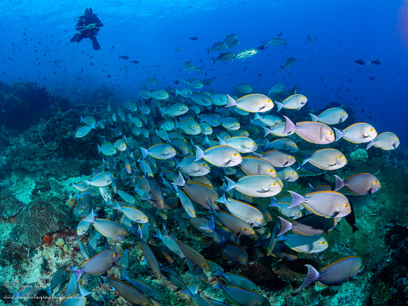 Diving Komodo, Indonesia - Underwater Photography Guide