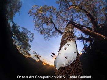 2nd Place - Fabio Galbiati