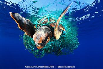 3rd Place – Eduardo Acevedo