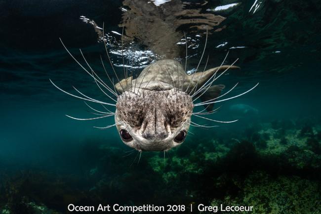 Ocean Art оголосила найкращі підводні фото 2018-го