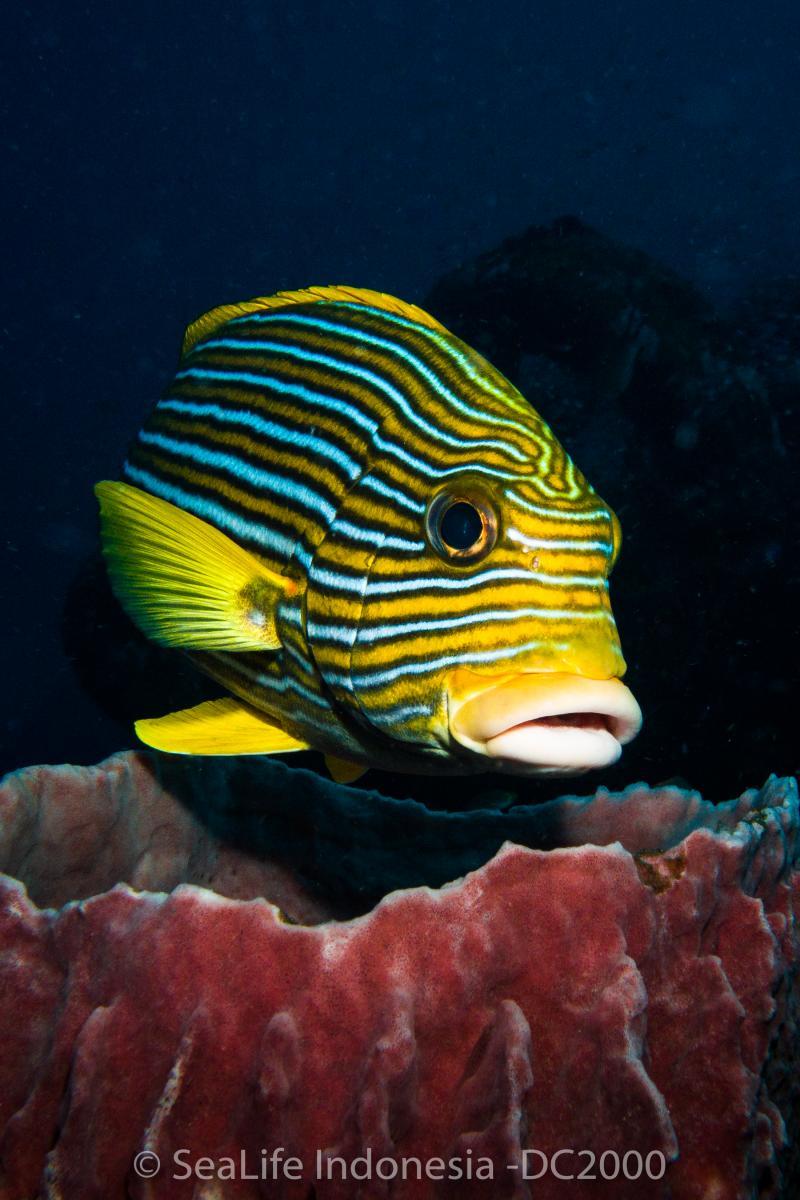 Sealife Dc2000 Underwater Camera Preview Underwater