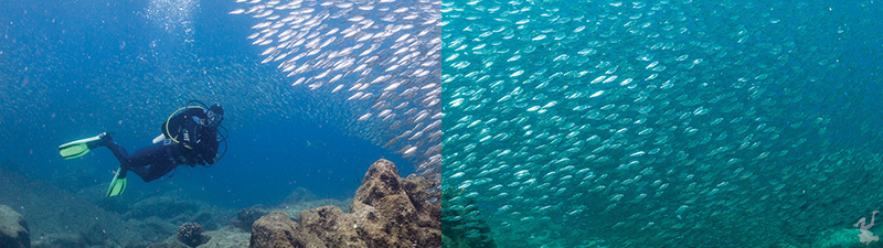 Color Filters vs  Post-Processing - Underwater Photography Guide